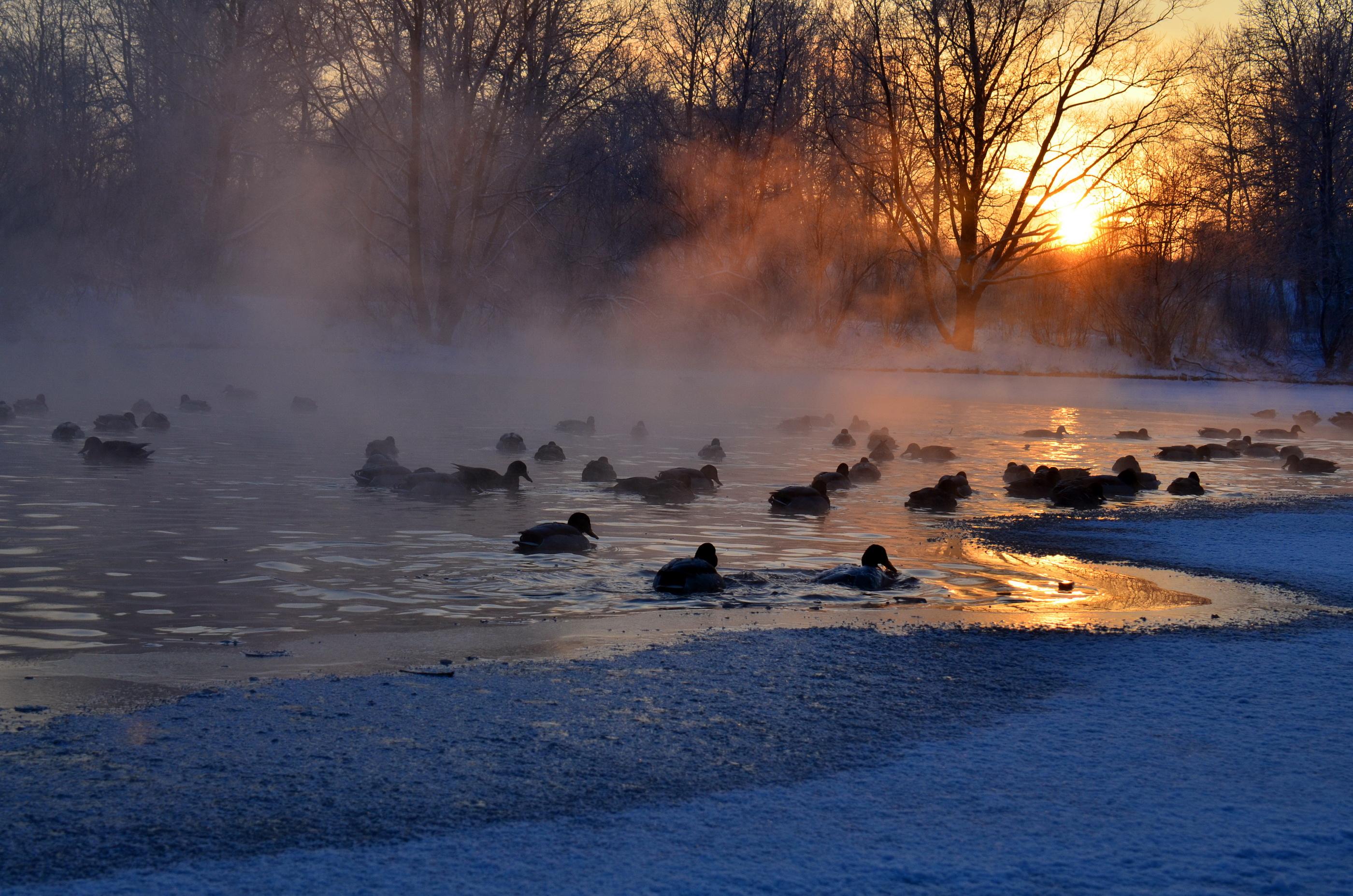 вопросы картинки полыньи на реке давних пор